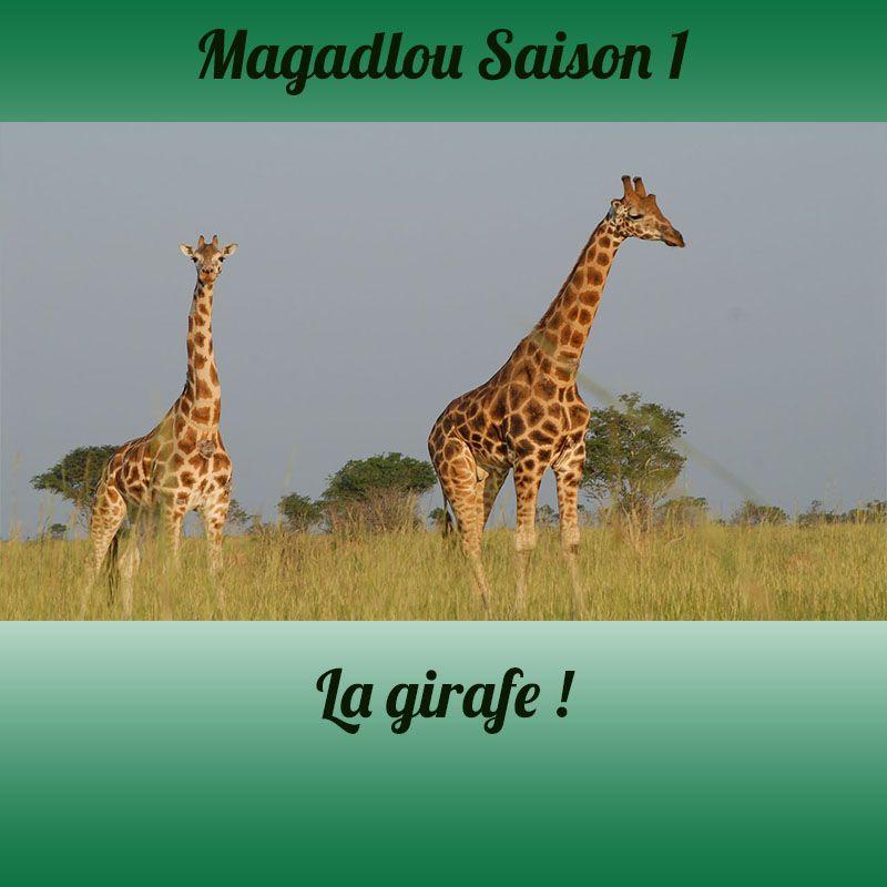 MAGADLOU S1 La girafe