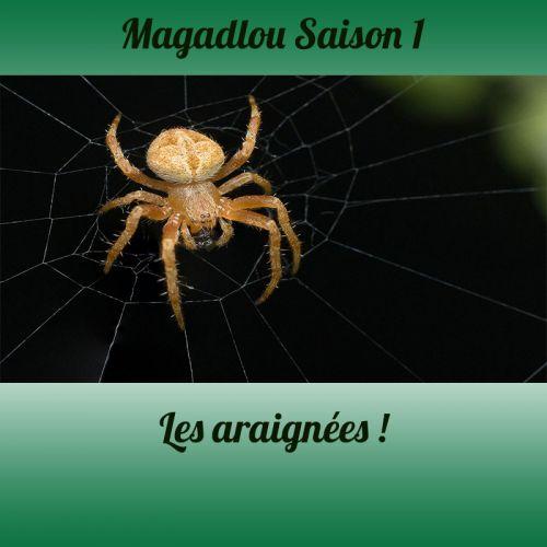 MAGADLOU S1 Les araignées