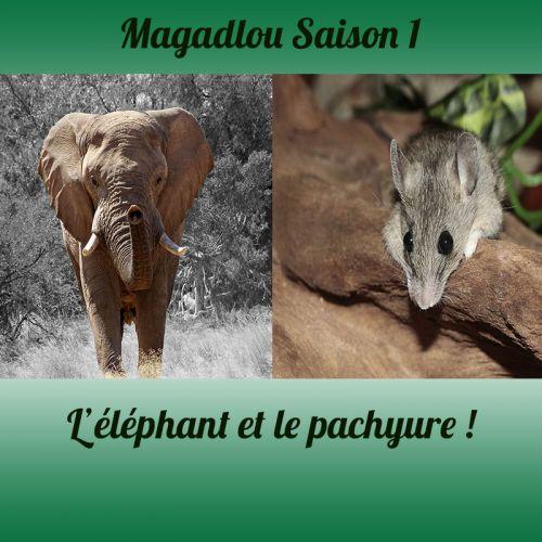 MAGADLOU S1 Eléphant Pachyure