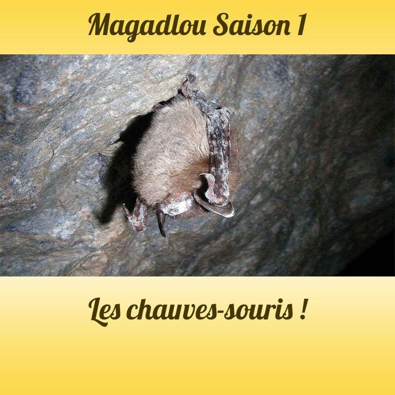 MAGADLOU S1 La chauve-souris