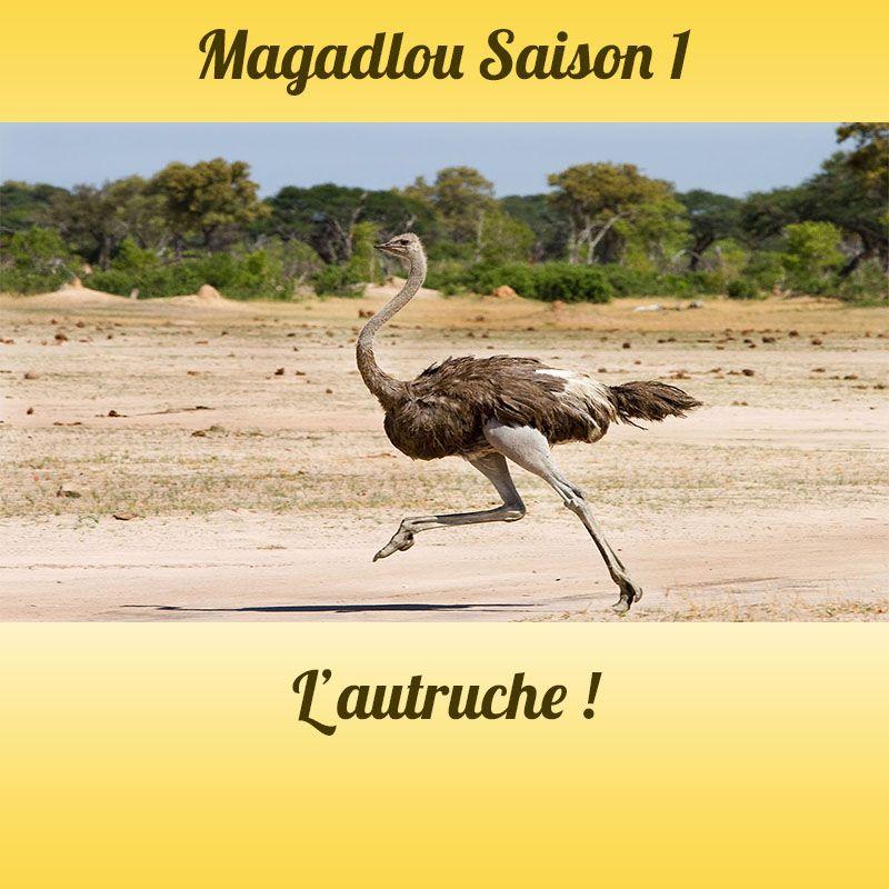 MAGADLOU S1 L'autruche
