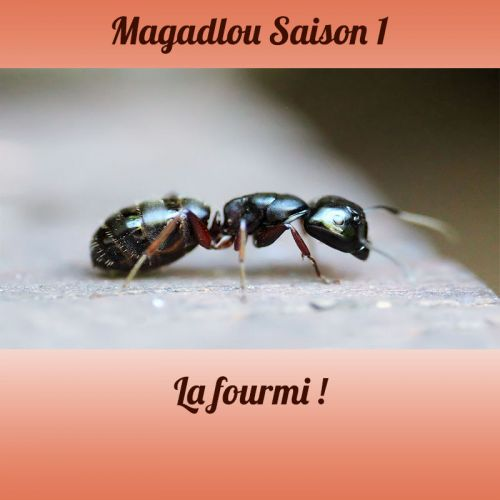 MAGADLOU S1 La fourmi