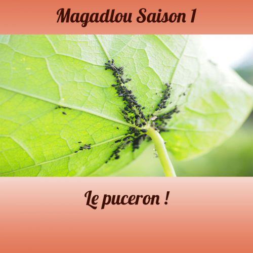 MAGADLOU S1 Le puceron