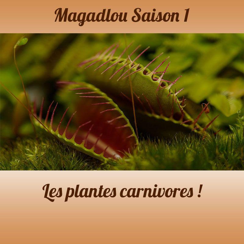 MAGADLOU S1 plantes carnivores