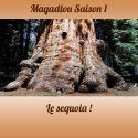 MAGADLOU S1 Le sequoia