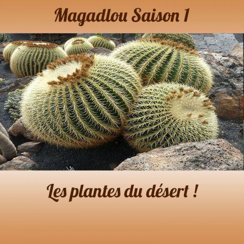 MAGADLOU S1 Les plantes