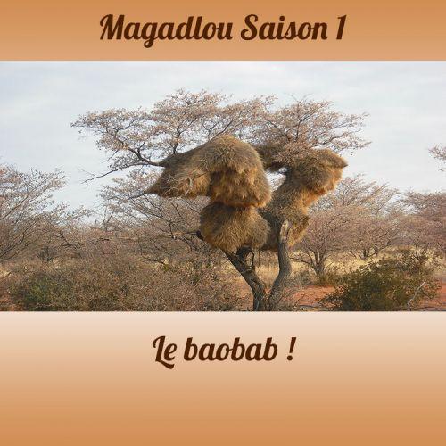 MAGADLOU S1 Le baobab