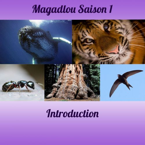MAGADLOU S1 Introduction
