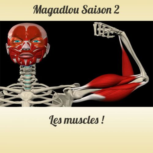 MAGADLOU S2 Les muscles