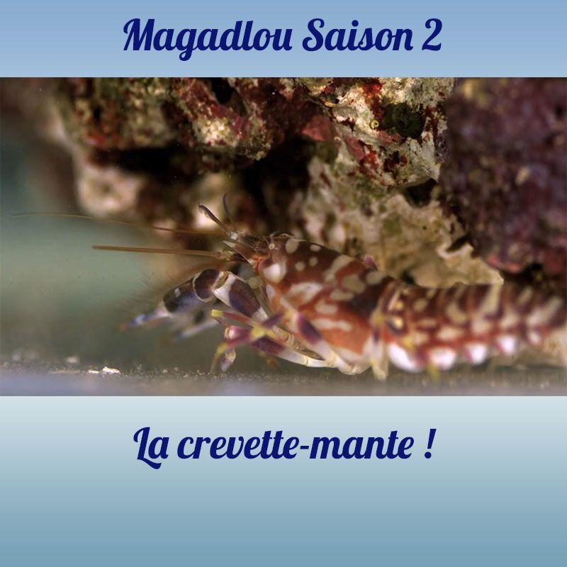 MAGADLOU S2 La crevette-mante