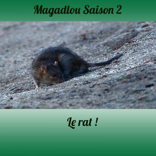 MAGADLOU S2 Le rat