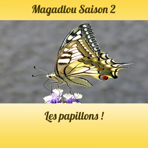 MAGADLOU S2 Les papillons