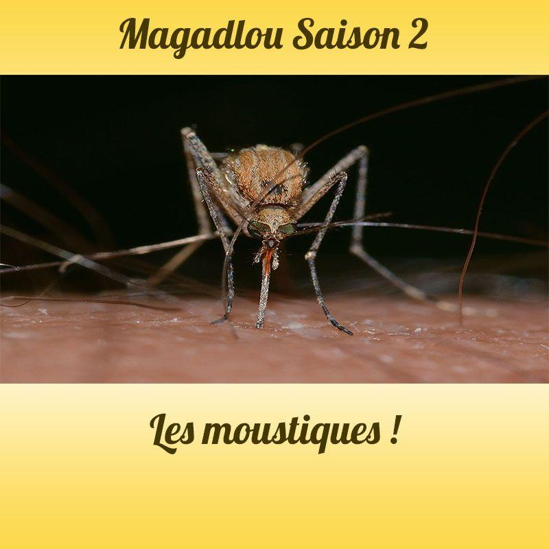 MAGADLOU S2 Les moustiques